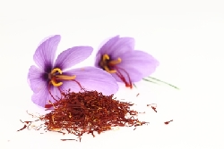 saffron organic natural wholesale supplier manufacturer producer quality facts