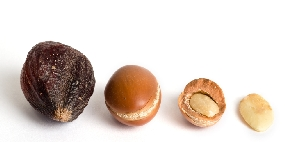 Arganfrucht Argannuss Argansamen Argan nuss mandel samen frucht Marokko Premium bio Arganöl